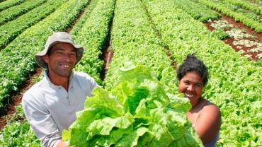 Núcleo MG da Aliança propõe ações para garantia da alimentação adequada e saudável no contexto da Covid-19