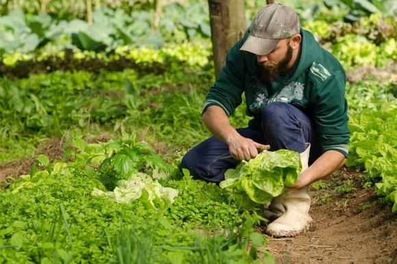 analise dos sistemas agroalimentares